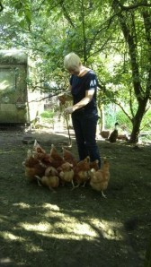 pet sitting macclesfield ducks chickens geese